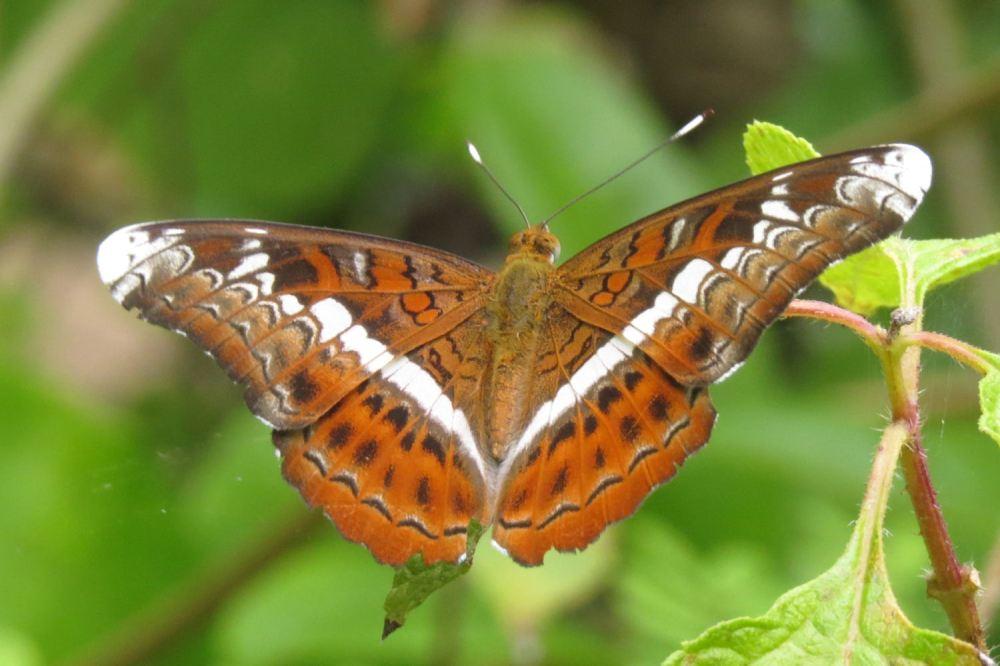 Banteay Srei Butterfly Centre