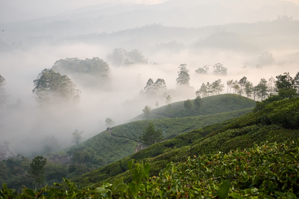 Morning view in Munnar