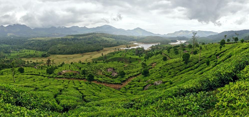 Munnar Panaromic view