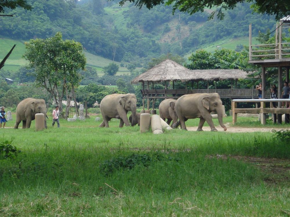 elephants-2088571_1920